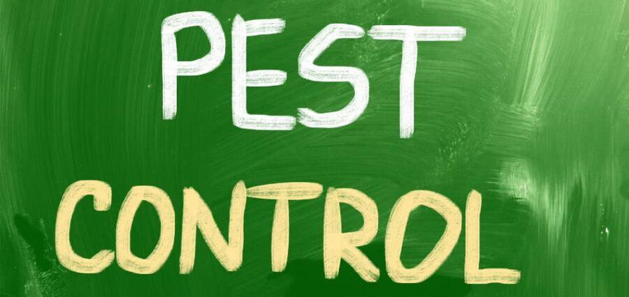 control de plagas cucarachas precio