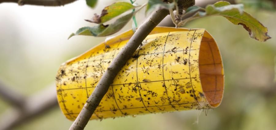 Trampas para mosquitos y control de plaga de insectos