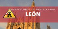 Control de plagas en León