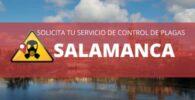 Empresas de control de plaga salamanca