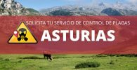 Control de plagas en Asturias