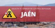 CONTROL DE PLAGAS EN JAÉN