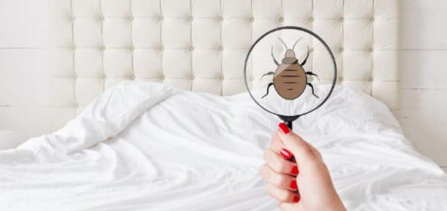 Eliminar chinches de la cama en Girona