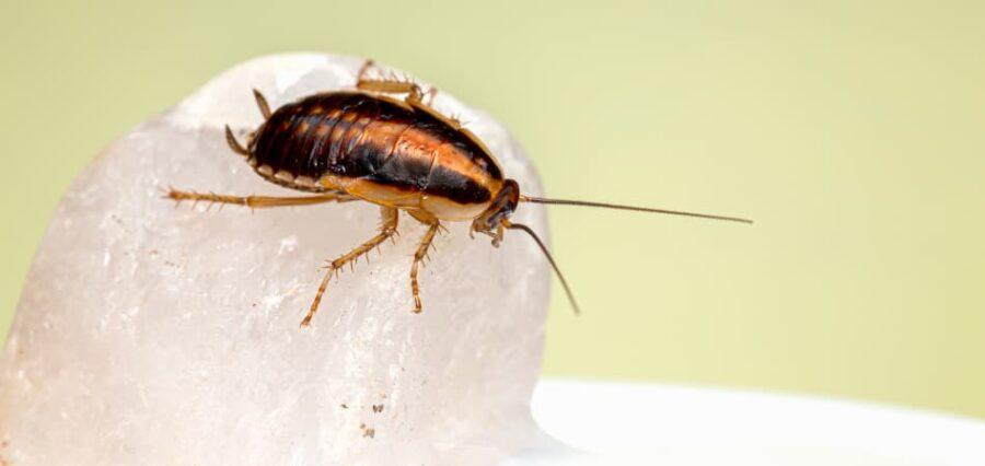 Eliminar cucarachas en Girona
